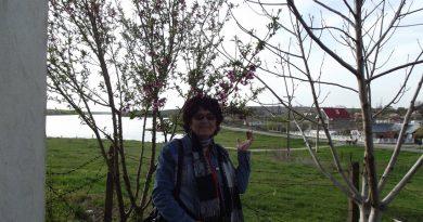 zaharia-covacef-mama-zizi